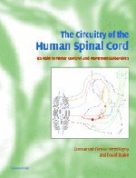 the-circuitry-of-the-human-spinal-cord-its-role-in-motor-control-and-movement-disorders