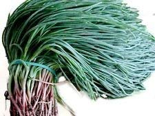 geoponics agretti, oka hijiki seeds - land sea, salicornia, europ, specialità asiatiche (5 grammi)