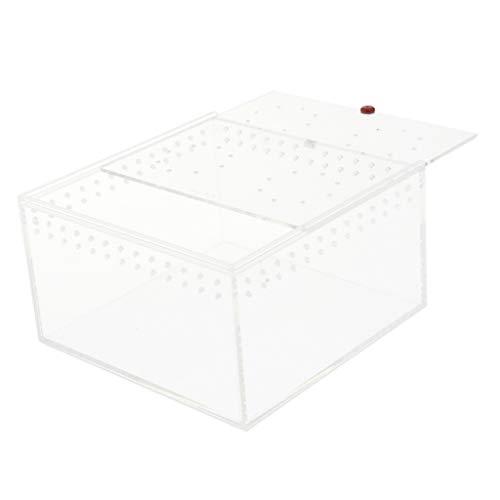 perfk Reptilien Zuchtbox Fütterungsbox Transportbox für Eidechse, Spinne, Skorpion, usw. - Transparent L