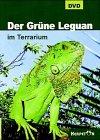 Der Grüne Leguan im Terrarium, DVD