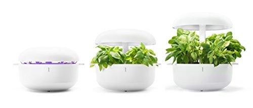 plantui sg6-w Smart Garden, blanco, 29x 29x 37cm