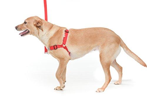 Zugloses Hundegeschirr, gemütliches Ausführen des Hundes,verstellbares Hundegeschirr. Easy Walk Hundegeschirr