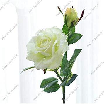 Exotique Miniature Bonsai Fleur Rose Rosas Graine Bricolage jardin et maison embellissant de purification d'air 110 Pcs/Sac 12