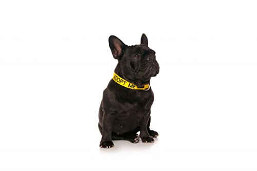 ADOPT-ME-I-Need-A-New-Home-Yellow-Colour-Coded-S-M-Buckle-Dog-Collar-Donate-To-Your-Local-Charity