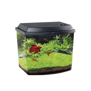 haquoss-acquario-blu-38-nero-mini-acquario-completo-38-litri-illuminazione-a-led