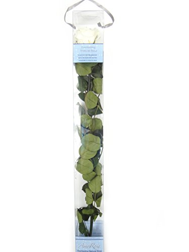 verdissimo-rosa-amorosa-50-cms-champagne-e20