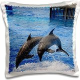 Kike Calvo Dolphins - Two dolphins finishing a dive together at Oceanographic Aquarium in Valencia, Spain - 16x16 inch Pillow Case