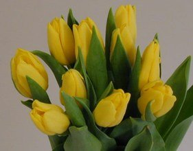 ramo-20-tulipanes-naturales-amarillos-para-regalar-portes-gratis