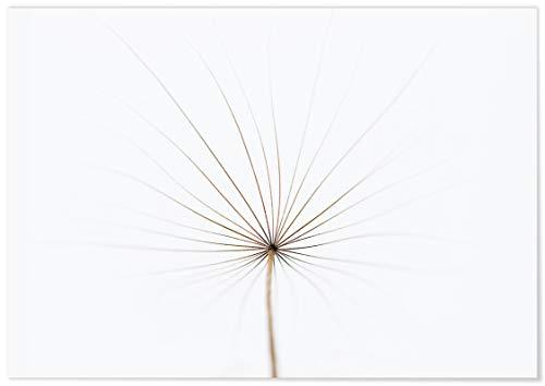 Panorama® Póster Diente León 30 x 21 cm | Impreso