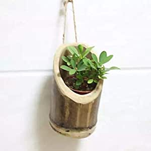 RAREPRODUCTS Vertical Hanging Planter 1 Pot with NailScrew Free -1 nos