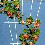Rosenspalier 61000 150x75 cm braun