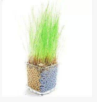 Mini Plantes en pot Mignon plante en pot de culture Anion plantation carbone céramique semences de gazon en forme de coeur-office créatif