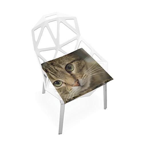 Tier Big Cat Head mit schönen grünen Augen Benutzerdefinierte weiche Rutschfeste quadratische Memory Foam Chair Pads Kissen Sitz für Home Kitchen Esszimmer Büro Rollstuhl Schreibtisch 16 X 16 Zoll