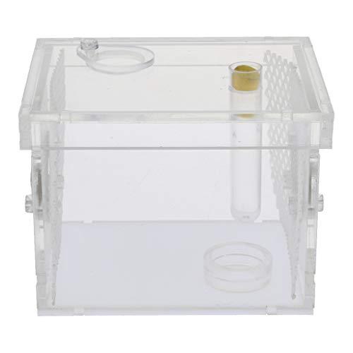 KESOTO Terrarium Reptilien Zuchtbox Fütterungsbox Insektenbox Transparent - S