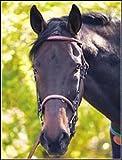 Henri de Rivel Hdr Adv Fancy Raised Snaffle–Filete Brida de cuero para caballos con riendas de cordones, Havana