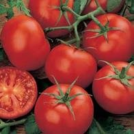 tomato-moneymaker-50-seeds
