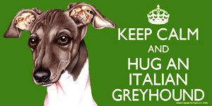 italian-greyhound-cane-regalo-grande-102-x-203-cm-colorato-keep-calm-magnete-magnete-flessibile-di-a