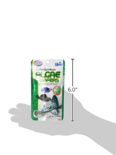 Hikari Usa Inc AHK21307 tropical Algae Wafer 1.41-Ounce 5