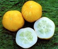 cucumber-crystal-lemon-20-seeds