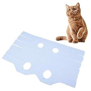 cirugía animales: GLOGLOW Ropa de Gato, Chaleco Respirable Suave del Traje del Gatito del Animal d...