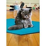 Avanti Press Yoga-Katze Grußkarte