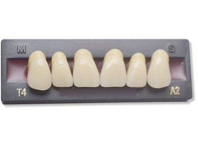 Dents Artificielles - INCISIVE DU HAUT (6 dents)
