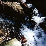 Bachblüten Original Rock Water 20 ml (20 ML)