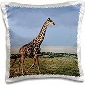 Giraffes - Namibia, Etosha NP, Angolan Giraffe