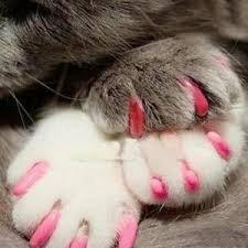 Imakar Krallenschutz für Katze, 20Stück, geliefert mit einer Tube Kleber und einem Präzisionsapplikator. Ungiftig und einfach zu verwenden. Krallenschutz für Katzen, ideale Lösung zum Schuz Ihrer Möbel - 5