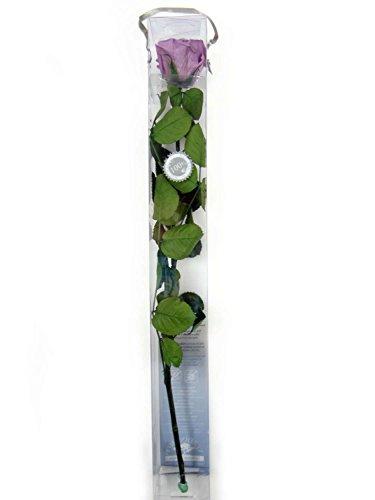 verdissimo-rosa-amorosa-50-cm-lila-e20