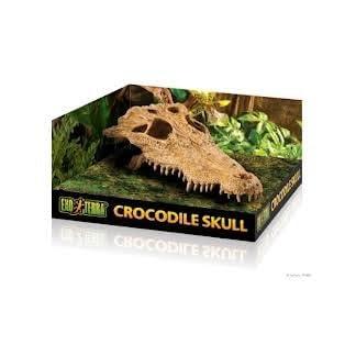 Exo Terra Crocodile Skull Terrarium D?cor for Reptiles, Secure hiding for reptiles and amphibians Exo Terra Crocodile Skull Terrarium D?cor for Reptiles, Secure hiding for reptiles and amphibians 31MecJ8wPjL