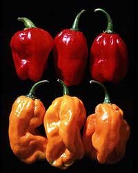 premier-seeds-direct-pepper-hot-suave-orange-numex-includes-40-seeds
