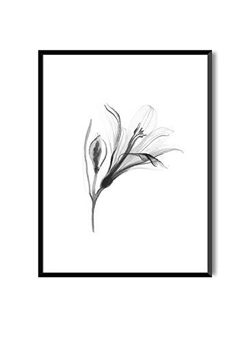MILUKA Láminas enmarcar colección Bloom | Lily |
