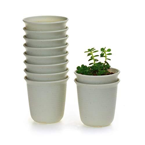 T4U Conjunto de 10 Ronda de plástico Plastico Planta Maceta Suculento Cactus Planta Maceta Planta Contenedor Vivero Maceta Macetas de jardín Macetas Envase