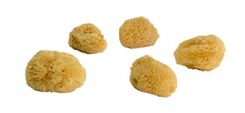 Menstruationsschwämmchen ZUSCHNEIDBAR Feinporiger Naturschwamm circa 5-6 cm - Vegane Alternative zu Binden oder Tampons | 5 Stück | ARISTOS