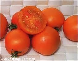 Tomate Auriga Bio Demter