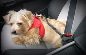 CURLI Auto-Sicherheitsgurt CAR SAFTY BELT für Hunde small – 30cm - 4
