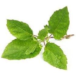 Kraft Seeds Tulsi or Tulasi or Holy Indian Tulsi Seed