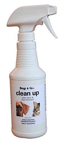 dogs-co-clean-up-from-urine-odour-and-stain-eliminator