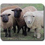 3 Sheep at Wachusett Mousepad