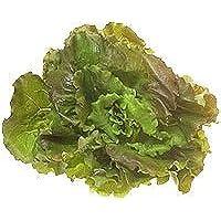 Obst & Gemüse Bio Salat Batavia rot/grün (1 x 1 Stk)