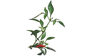 Capsule Peperoncino Rosso Piccante Plantui - Confezione da 3 pezzi