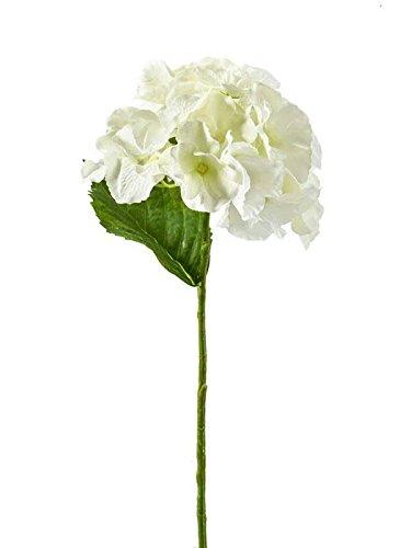 Klocke Kunstpflanzen Deko Blume Hortensie Creme - 3 Stück - Premium Qualität - Dekoblume/Dekohortensie - Länge: 25cm - Kleine Tischblume/Kunstblume - Textilblume/Seidenblume zum Dekorieren (Seidenblumen Creme Hortensien)