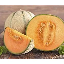 Bobby-Seeds Melonensamen Bari F1 Zuckermelone Portion