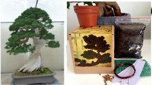 Bonsai Anzuchtset – Saatausstattung zum pflanzen eines chinesischen Wacholder Bonsais -Samen / Pflanzentöpfe / Erde / Draht / Anleitung/Etiketten/Planzentopfnetz