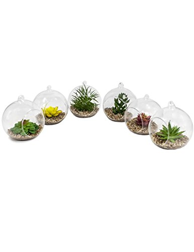 Dahlia 6Stück Künstliche Mini Sukkulente Topfpflanzen in Glas Globe Blumentopf Übertopf, Set B