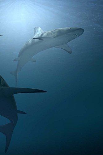 Sharks Notebook por Wild Pages Press
