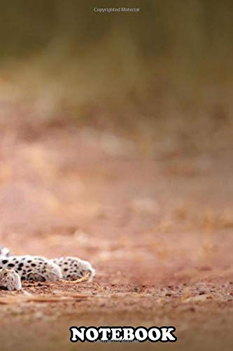 Notebook: Young African Leopard Panthera Pardus Shortidgei Hwan , Journal for Writing, College Ruled Size 6