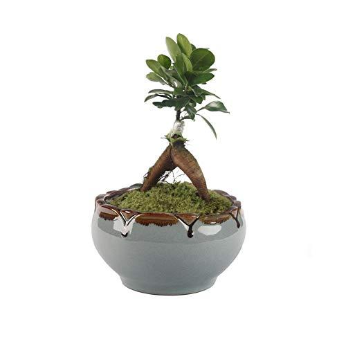 Vaso da Fiori Giardino Vaso da Fiori Vaso da Fiori in Ceramica Contenitore  di Ghiaccio Zisha Serial Cactus Fioriera Fioriera Vaso per piante, 15cm 15  ...