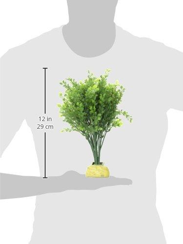 Exo Terra Buchsbaum - 2